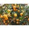 江西抚州蜜梨、蜜桔、贡面、藕丝糖、茶薪菇等特产名扬天下