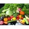 【咦咦?试试?】莱芜有机韭菜【批发有机蔬菜礼盒】青州有机蔬菜