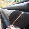 各种型号防腐油木杆6米-10米,小头直径10cm--16cm